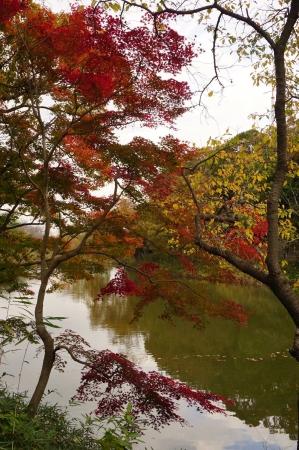 DSC01313三ツ池公園