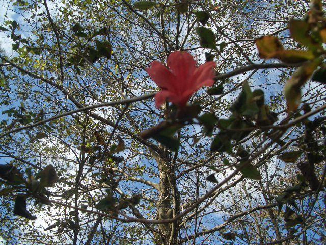 ヤマツツジの返り咲き