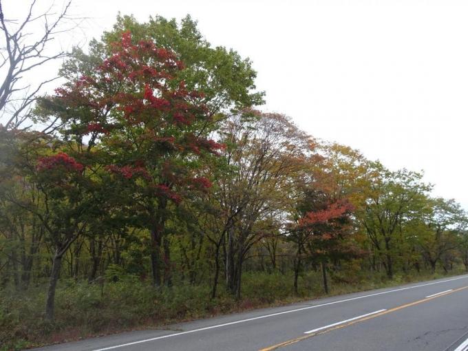 道路の紅葉