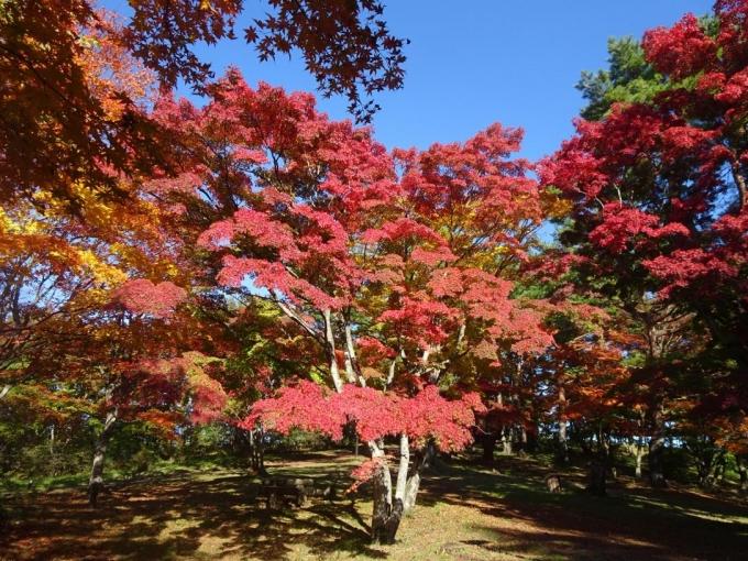 上ノ山公園1