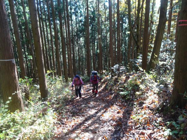 杉林の急登
