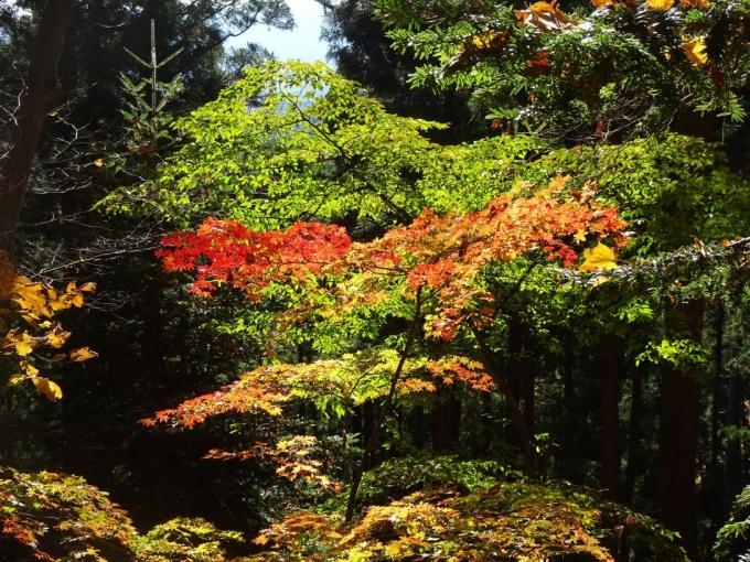 陽を浴びて赤も緑も映える