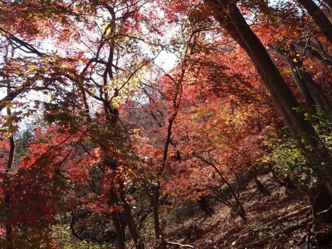 猿岩付近の紅葉