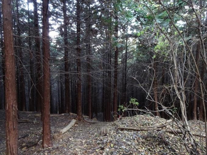植林帯へ突入
