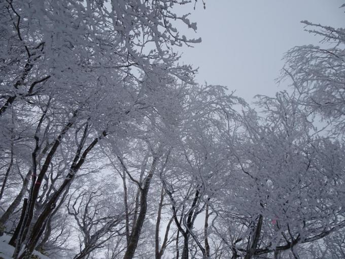 霧氷はすごいけど曇り空