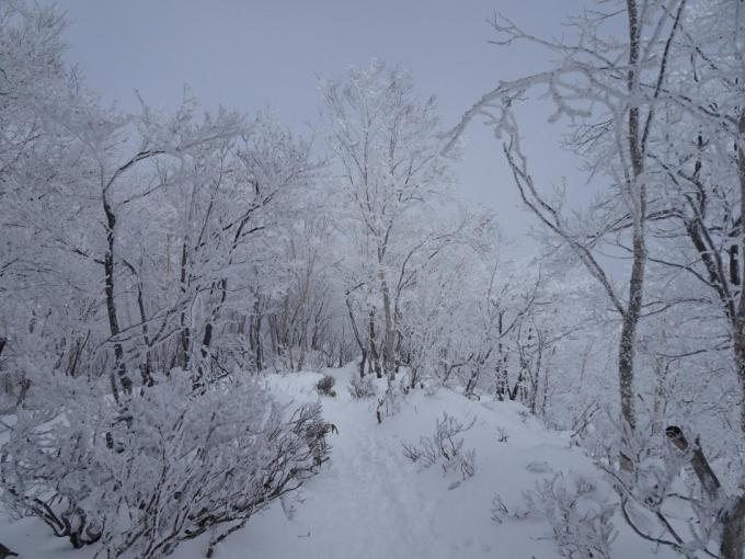 黒檜山山頂への道