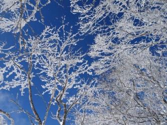 帰りの霧氷の森3