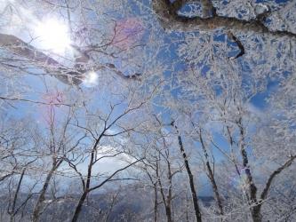 帰りの霧氷の森4