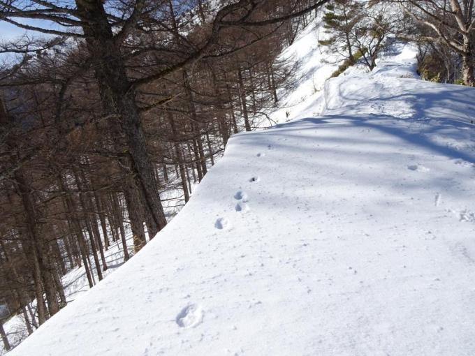 雪庇の上にうさぎの足跡