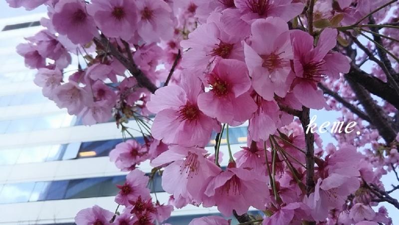 有楽町の桜c (2)