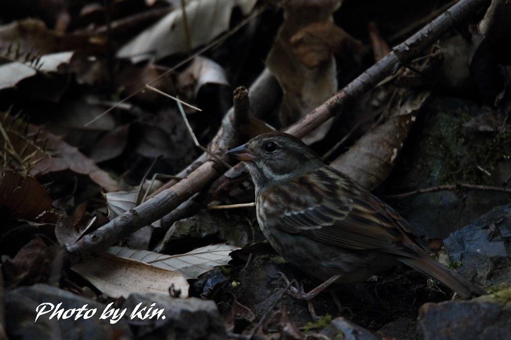 kin-2019011900011.jpg
