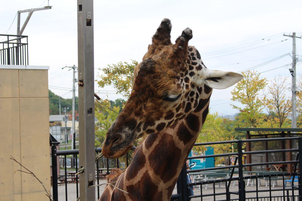 旭山動物園-2