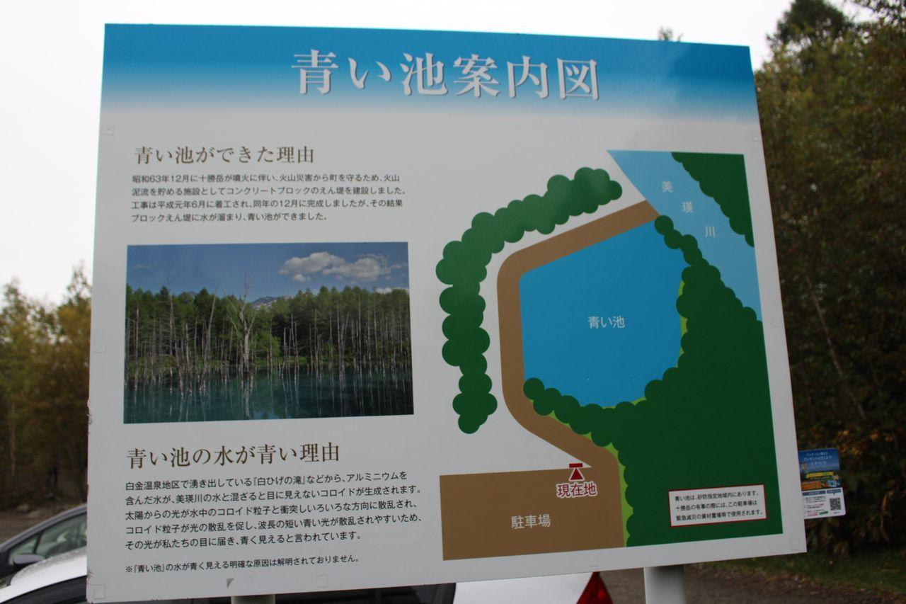 美瑛 青い池-2