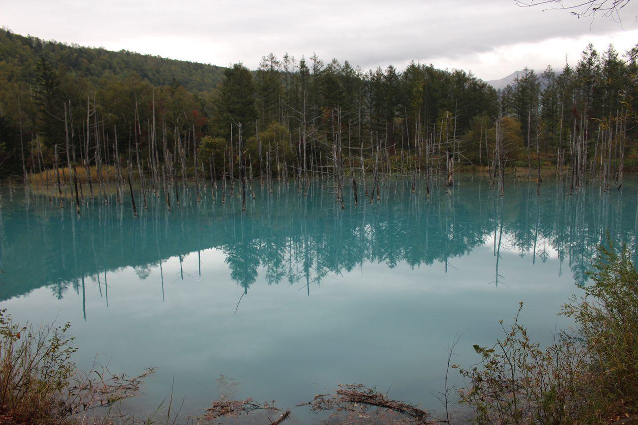 美瑛 青い池-1