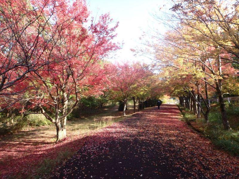 小幡緑地、紅葉