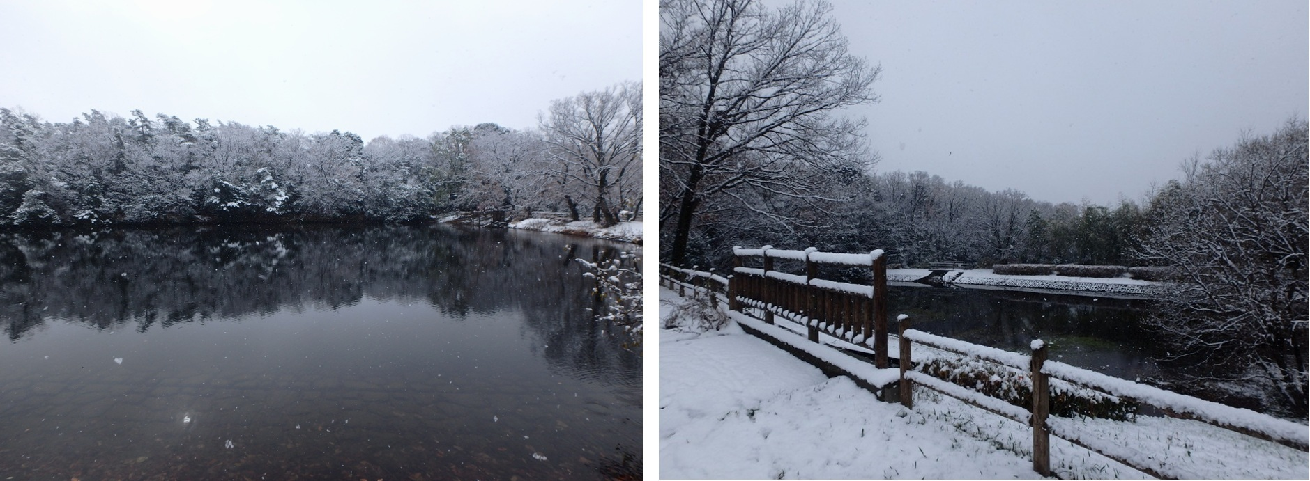 生玉稲荷の朝市の後の雪