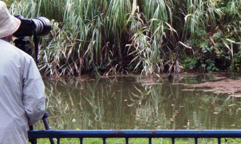 カワセミ 庄内緑地公園