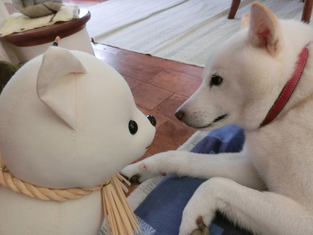 おかげ犬のお見舞い