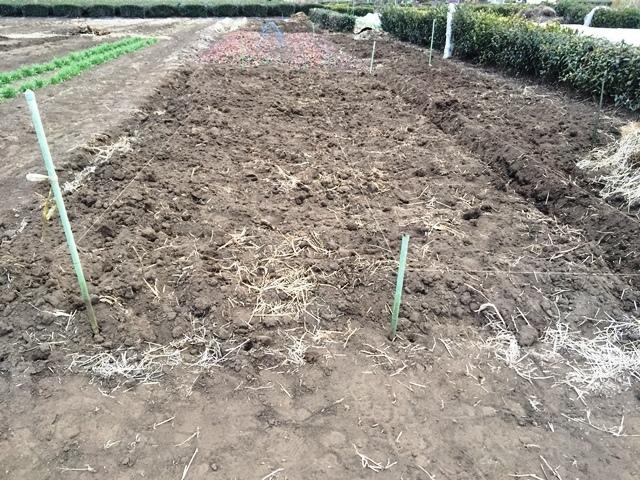 ジャガイモ畑の準備