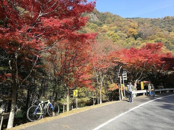 円城ポタ18.11.10②