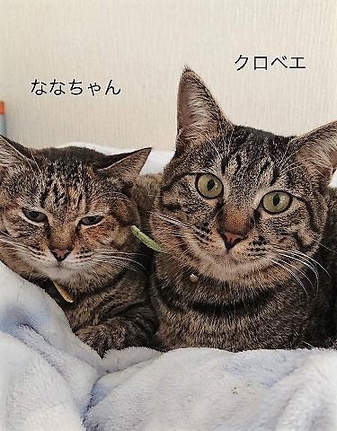 nanakuro.jpg