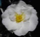 190224-01.jpg