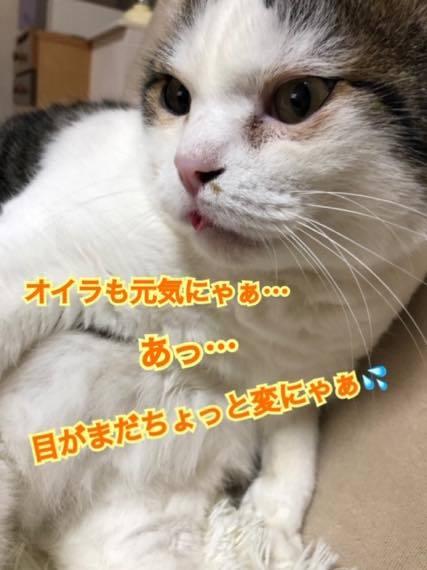 th_IMG_8104.jpg