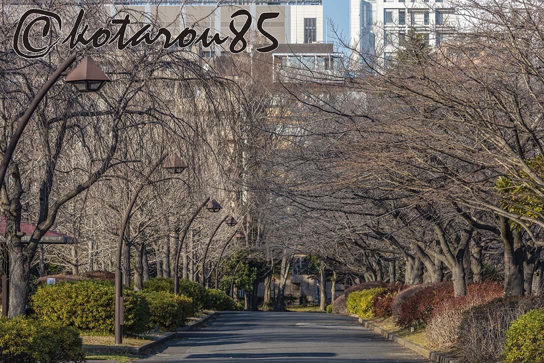 猿江恩賜公園 20190118