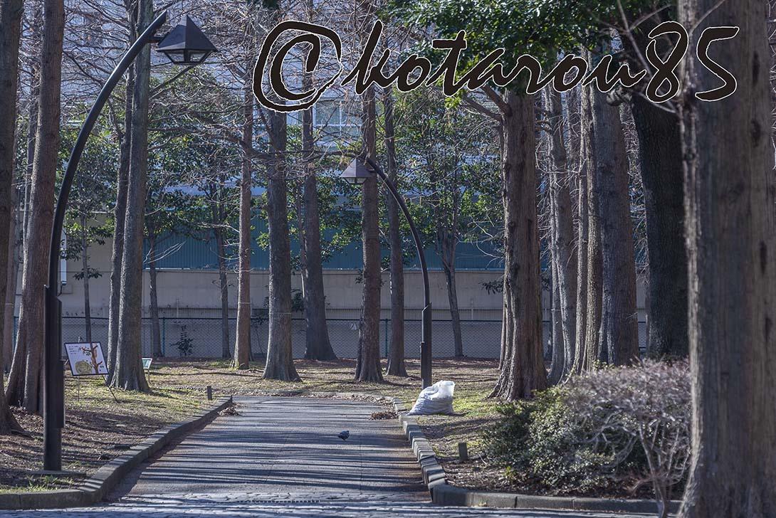 猿江恩賜公園4 20190203