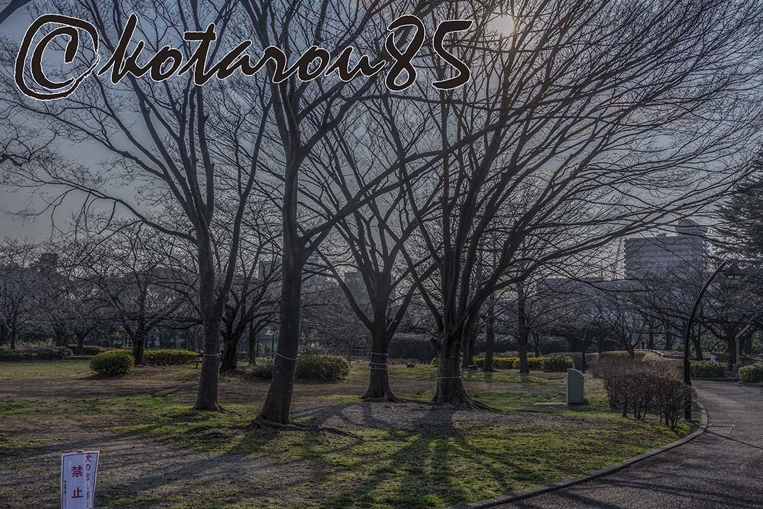 火曜日の猿江恩賜公園4 20190227
