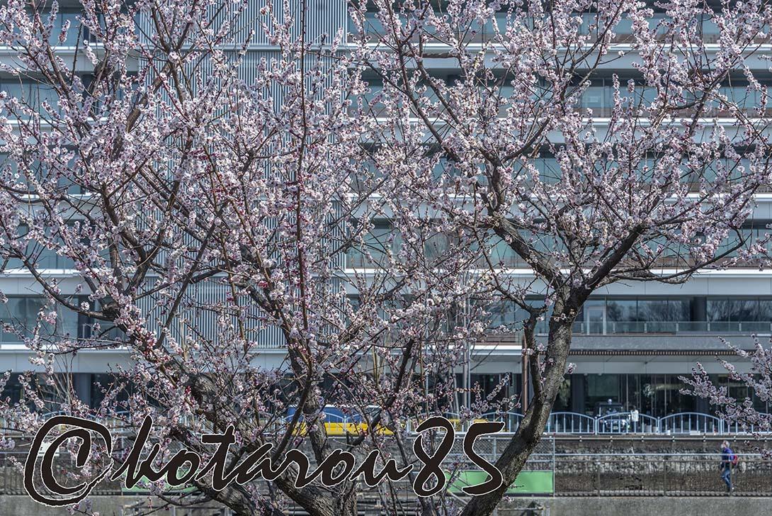 火曜日の猿江恩賜公園2 20190313