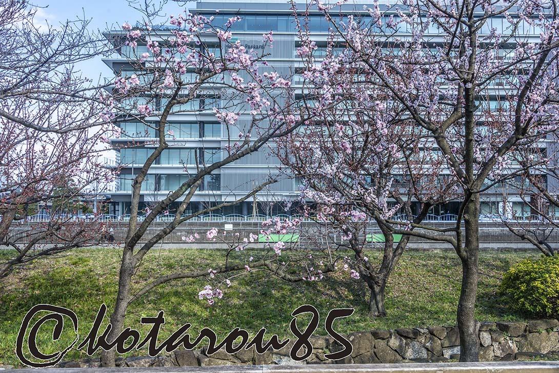 猿江恩賜公園 春景色4 20190317