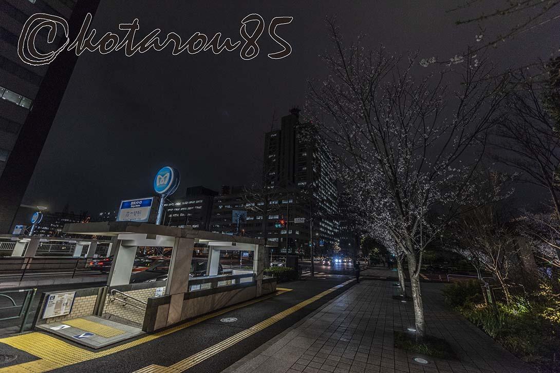霞ヶ関のサクラ3 20190323