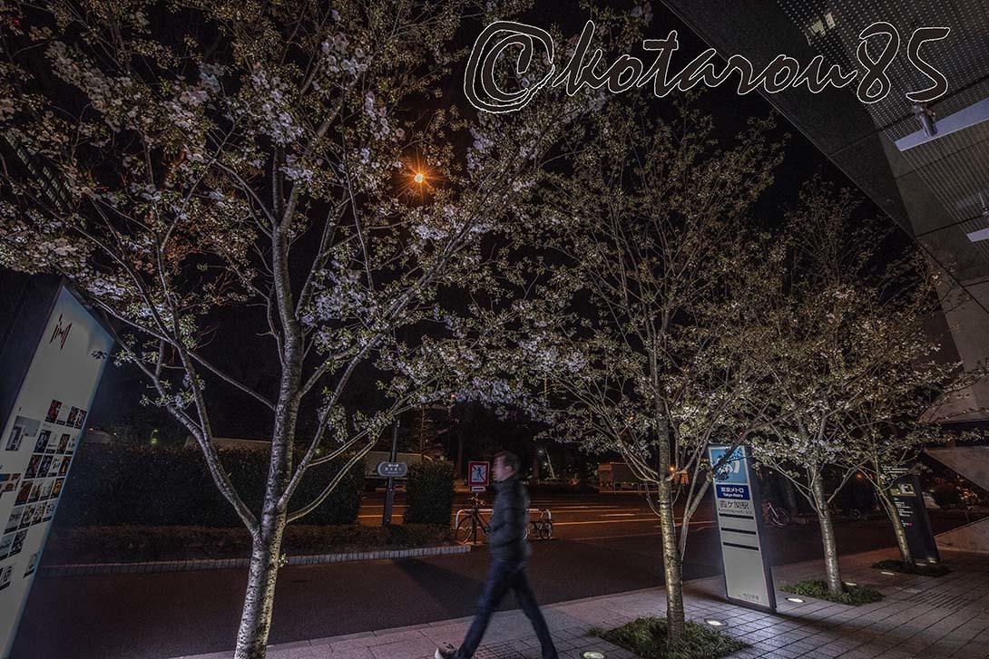 霞ヶ関の夜桜2 20190325
