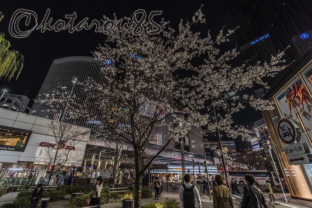 数寄屋橋の桜 20190328