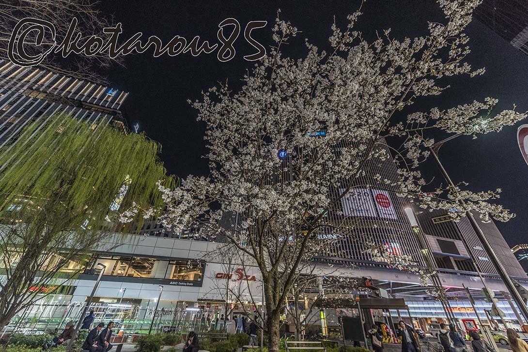 数寄屋橋の桜2 20190328