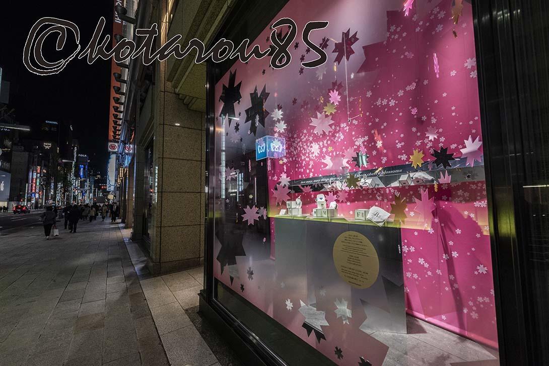 ショーウィンドウの桜2 20190328