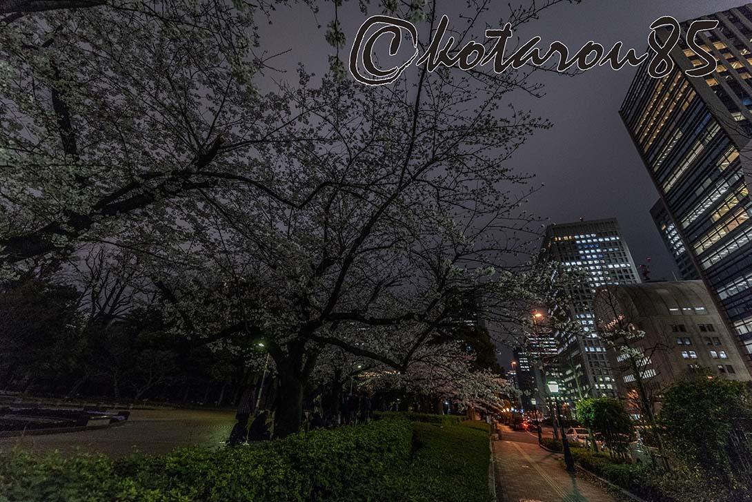 日比谷公園の桜2 20190330