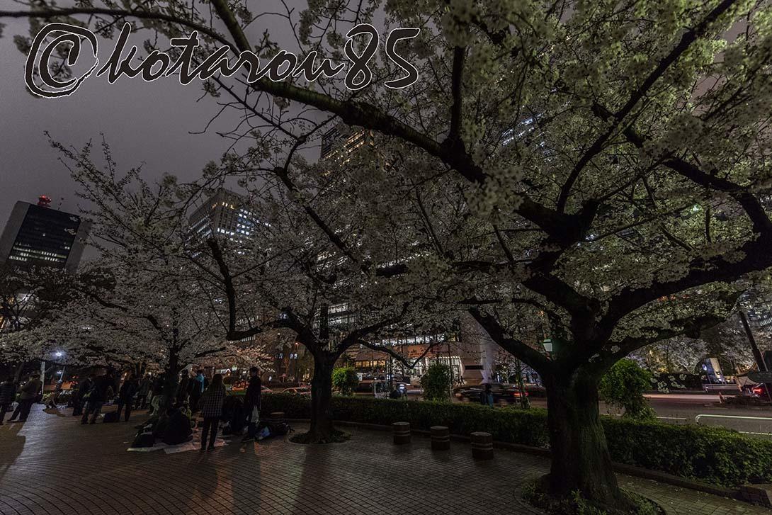 日比谷公園の桜3 20190330