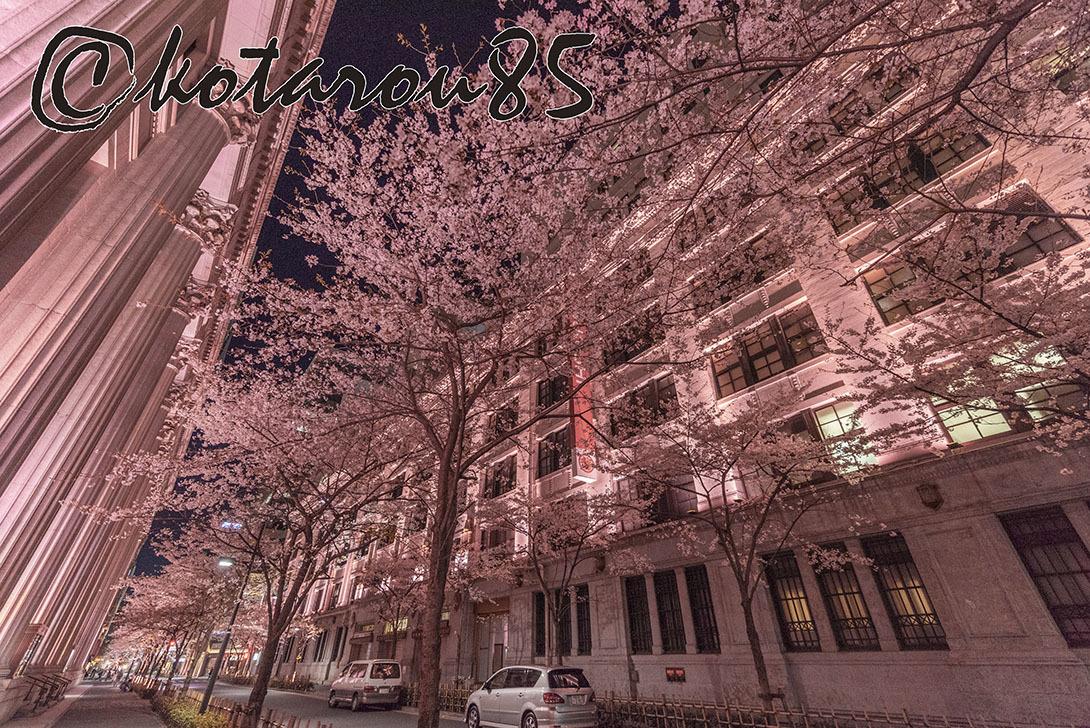 今年も江戸櫻通りへ4 20190407