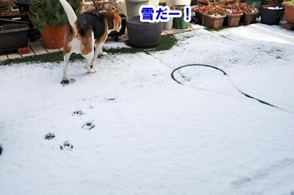 雪遊び 1