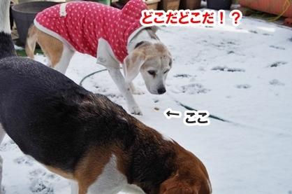 雪遊び 6