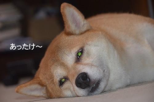 この時のゆず 11/14