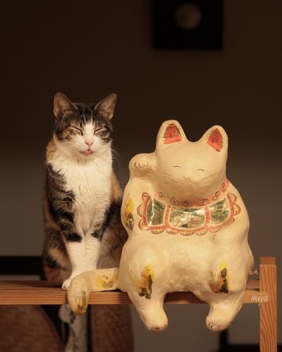 みけ招き猫m032A2771