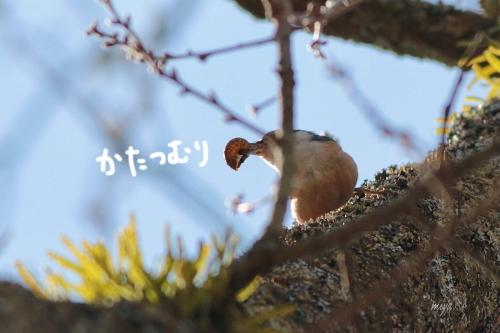 蝸牛ゴジュウカラm995A3509