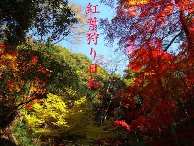 mini_2211_kouyou_DSCF6025.jpg
