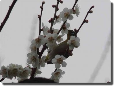 mini_9915_20180303_mejiro_P3035405.jpg