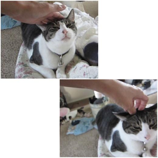 cats_201902252210314ad.jpg
