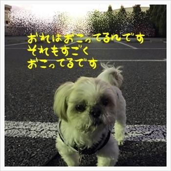 IMG_2058.jpg
