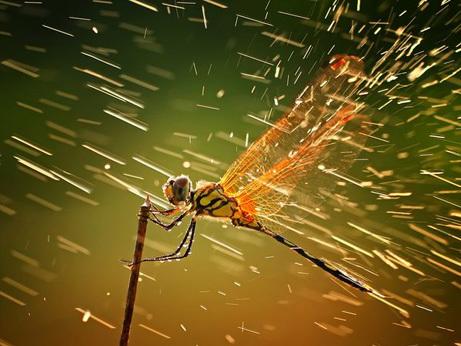 dragonfly-rain-storm_45835_big_20190211221942aa0.jpg